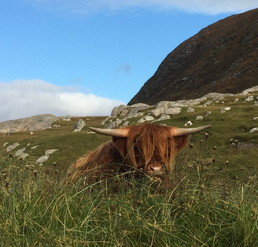 Outer Hebrides Walking Tour - Day 7